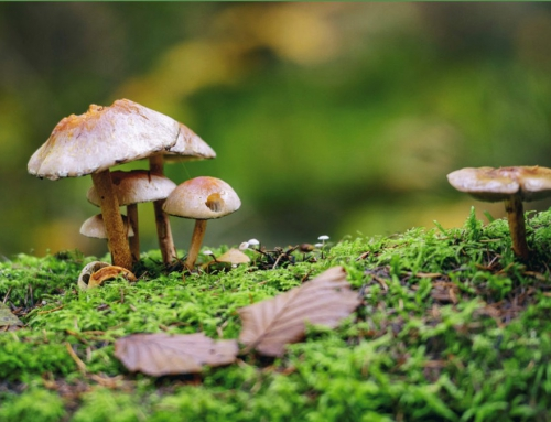 Technion scientists to save the seas with mushrooms