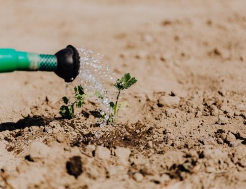 L'irrigation de précision