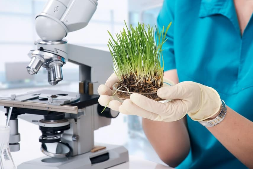 Grass grown in the laboratory