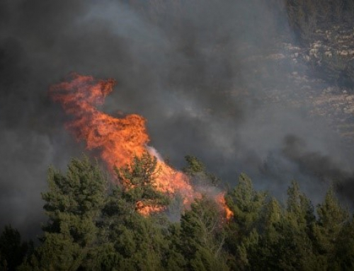 New laser solution could slow spread of forest fires