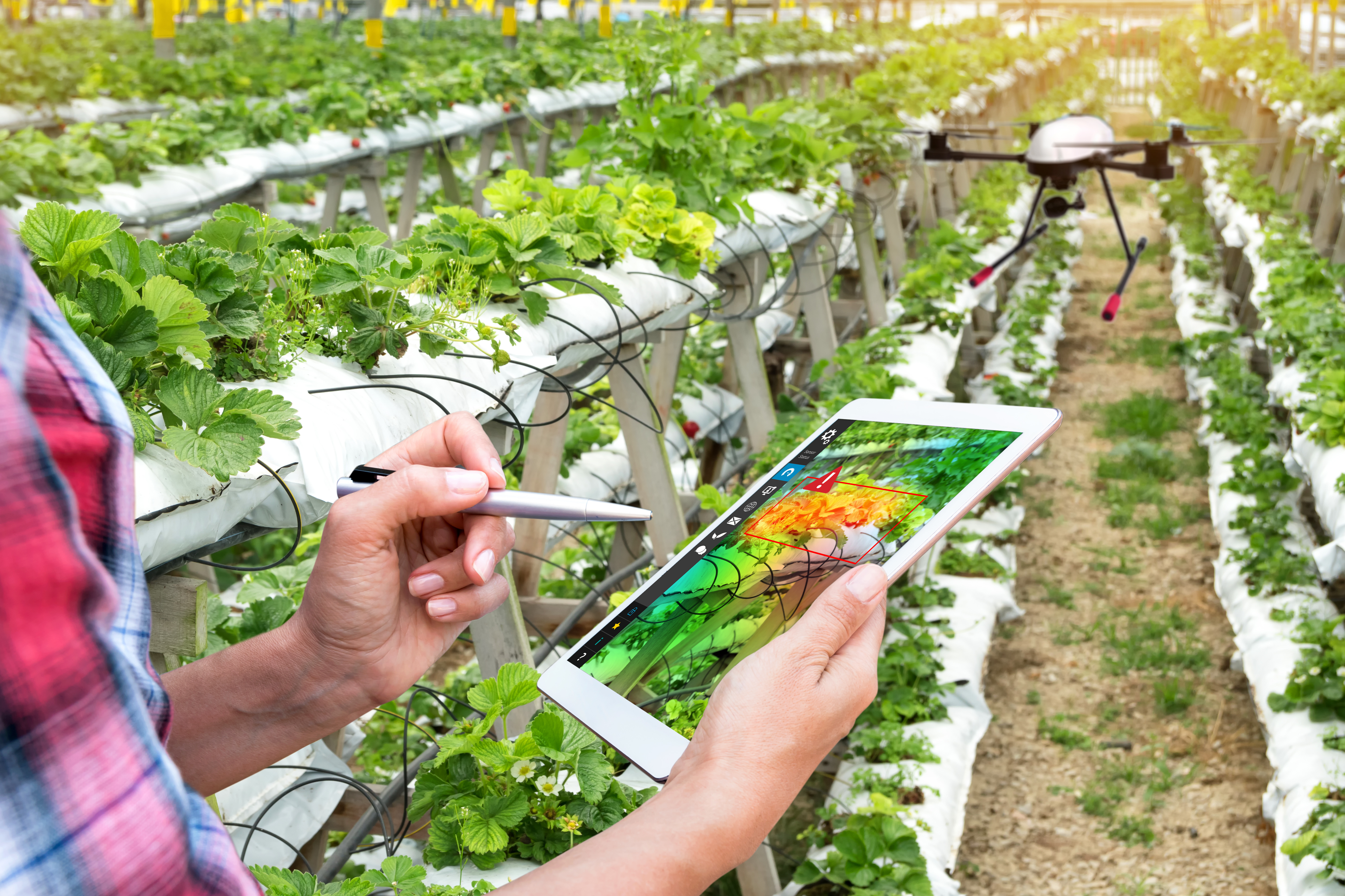 Internet thing in Agriculture Sector