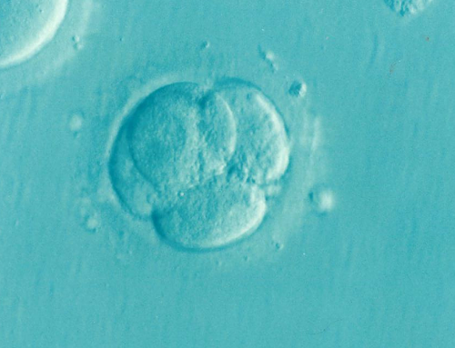 Emergence of 3D Imaging Technology of Sperm cell in Israel