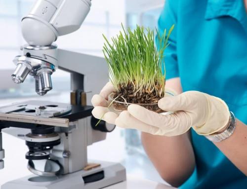 Companii Agro-tehnologice din Israel si contributia lor in industria de Food