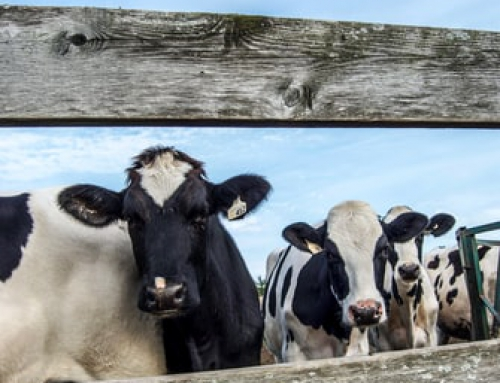 The Israeli Dairy Model –  Leading the Way with Innovation