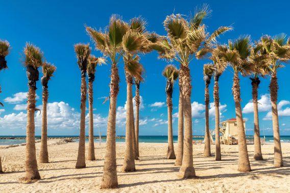 Palm trees on Tel Aviv sand beach, Israel.